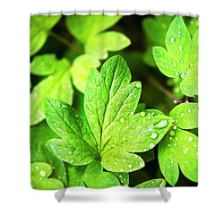 Shower Curtain featuring the photograph Green Leaves by Christina Rollo