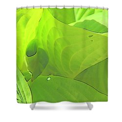 Green Leaves Sketch 2 Shower Curtain
