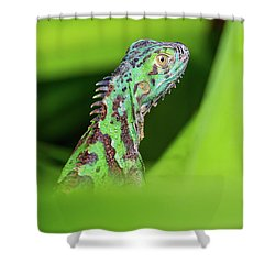 Shower Curtain featuring the photograph Green Lizard In Costa Rica by John Haldane