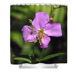 Green Lynx Spider On Meadow Beauty Shower Curtain
