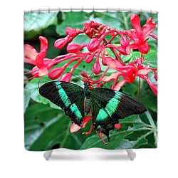 Green Moss Peacock Butterfly Shower Curtain by Betty Buller Whitehead