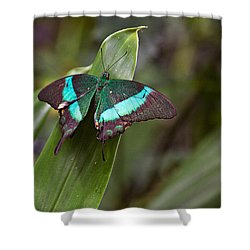 Shower Curtain featuring the photograph Green Moss Peacock Butterfly by Peter J Sucy
