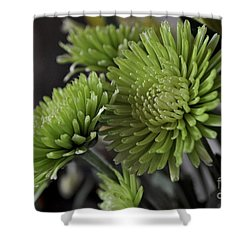 Green Mums Shower Curtain