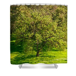 Green Oak Tree And Grasses Shower Curtain