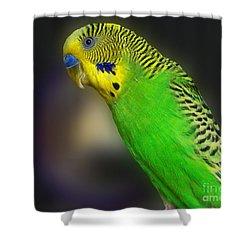 Green Parakeet Portrait Shower Curtain