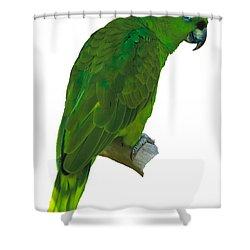 Green Parrot On White  Shower Curtain