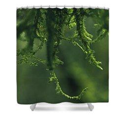 Flavorofthemonth Shower Curtain