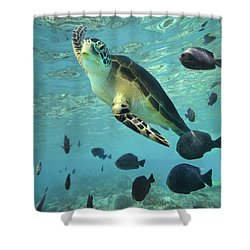 Shower Curtain featuring the photograph Green Sea Turtle Balicasag Island by Tim Fitzharris