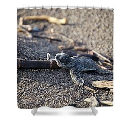 Green Sea Turtle Hatchling Shower Curtain