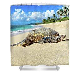 Green Sea Turtle Hawaii Shower Curtain