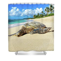 Green Sea Turtle Hawaii Shower Curtain