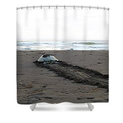 Green Sea Turtle Returning To Sea Shower Curtain
