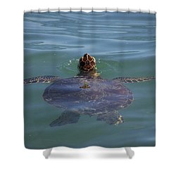 Shower Curtain featuring the photograph Green Sea Turtle by RKAB Works