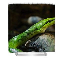 Green Snake Shower Curtain by Daniel Precht