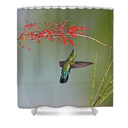 Green-throated Carib Shower Curtain