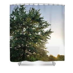 Green Tree Bright Sunshine Background Shower Curtain by Matt Harang