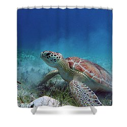 Green Turtle Shower Curtain by Kimberly Mohlenhoff