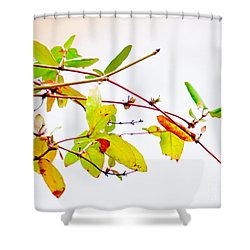 Green Twigs And Leaves Shower Curtain
