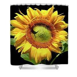 Greenburst Sunflower Shower Curtain by Rona Black