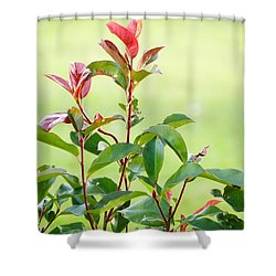 Greenery And Red Shower Curtain