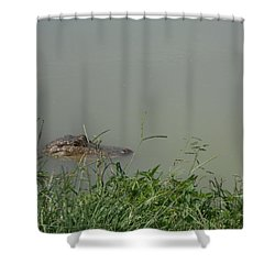 Greenwood Gator Farm Shower Curtain by Cynthia Powell