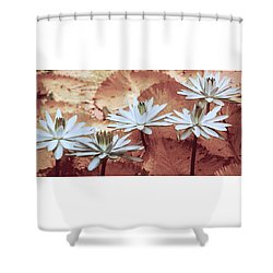 Greeting The Day Shower Curtain by Holly Kempe