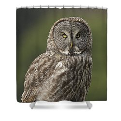 Great Gray Owl Portrait Shower Curtain by Doug Herr