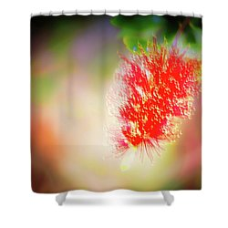 Grevillea Dream Shower Curtain
