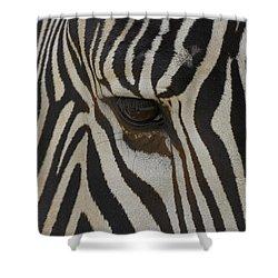 Grevys Zebra Equus Grevyi Close Shower Curtain by Zssd
