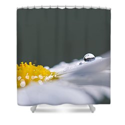 Grey And Yellow Daisy Shower Curtain