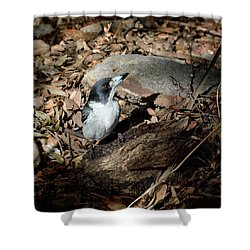Shower Curtain featuring the photograph Grey Butcherbird by Nicholas Blackwell