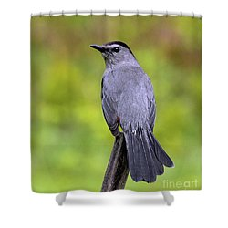 Shower Curtain featuring the photograph Grey Catbird by Debbie Stahre