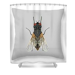 Grey Fly Pillow Shower Curtain
