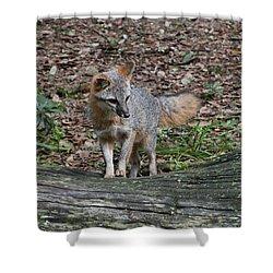 Grey Fox Shower Curtain
