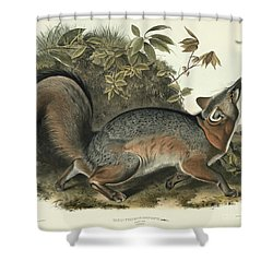 Grey Fox Shower Curtain by John James Audubon