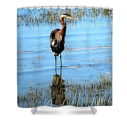 Grey Heron Blue Water Shower Curtain