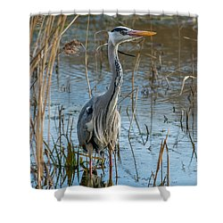 Grey Heron Hunting Shower Curtain