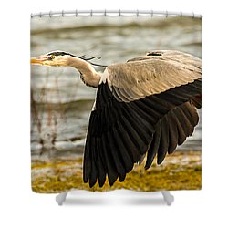 Grey Heron In Flight Shower Curtain
