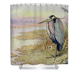 Grey Heron Shower Curtain by John James Audubon