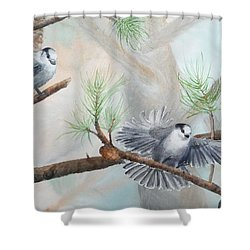 Grey Jays In A Jack Pine Shower Curtain