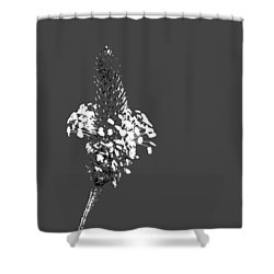 Grey Plaintain Shower Curtain by Richard Patmore