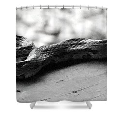 Grey Rat Snake Shower Curtain