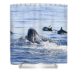 Grey Whale 1 Shower Curtain