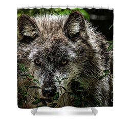 Grey Wolf Shower Curtain by Brad Allen Fine Art