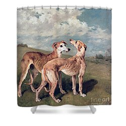 Greyhounds Shower Curtain by John Emms