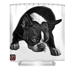 Greyscale Boston Terrier Art - 8384 - Wb Shower Curtain by James Ahn