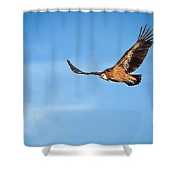 Griffon Vulture Shower Curtain by Meir Ezrachi