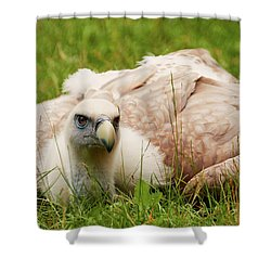 Shower Curtain featuring the photograph Griffon Vulture by Nick Biemans