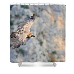 Griffon Vulture Shower Curtain by Richard Patmore