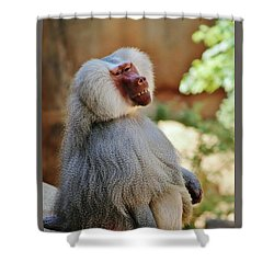 Grinning Baboon Shower Curtain by Craig Wood